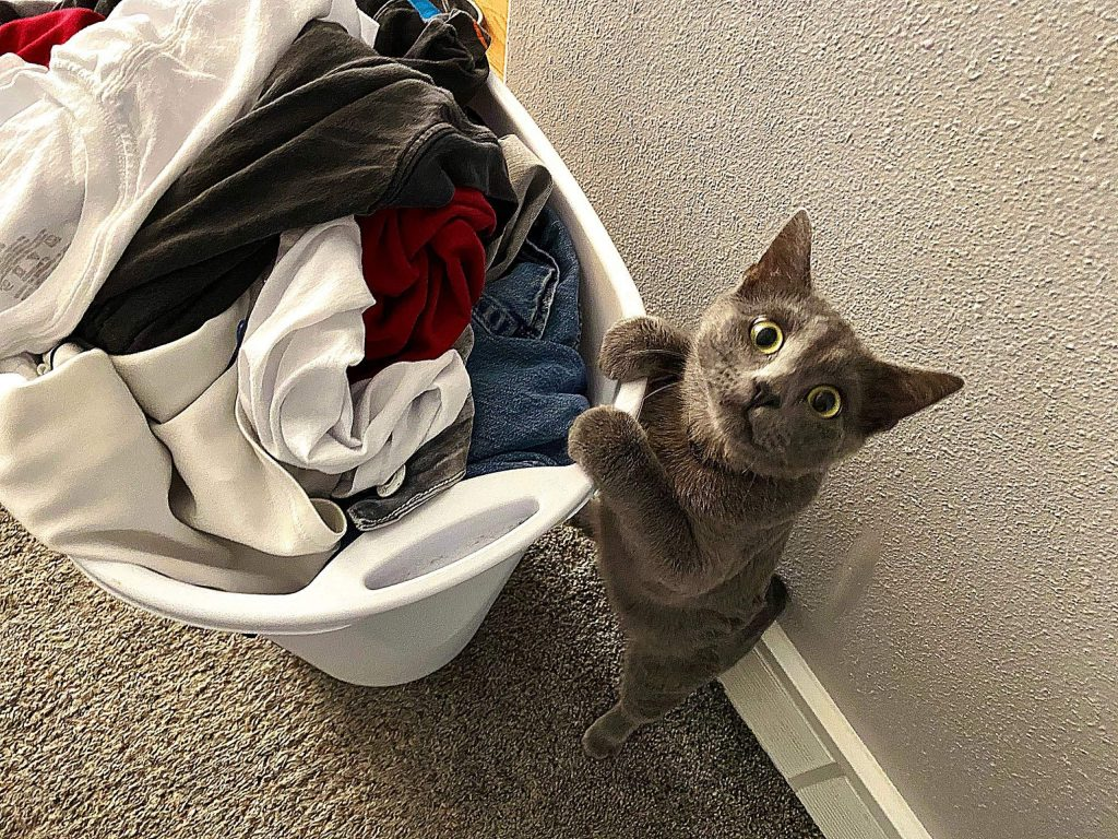 Grandcat, Zissou, assisting Granddaughter with laundry!