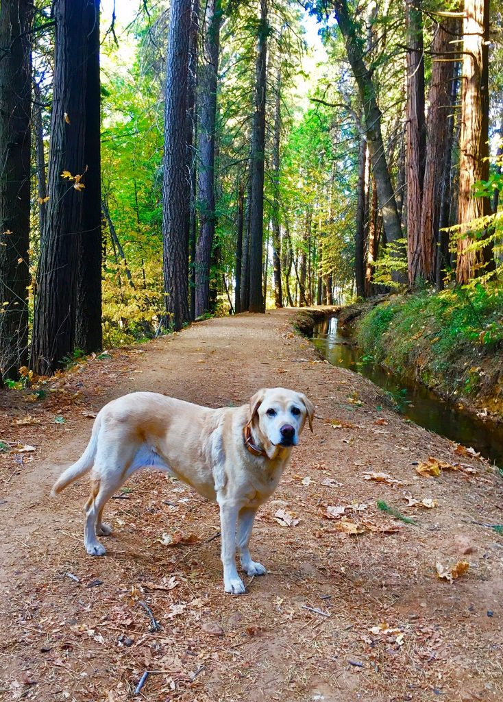 Pearl-the-Squirrel-Girl loves her walks along the Cascade Trail.