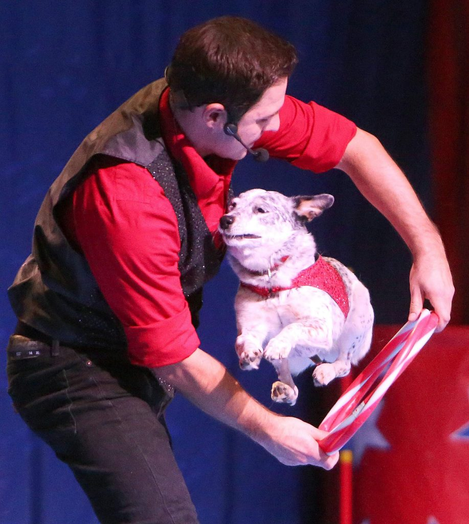 "Chris Perondi ""The Stunt Dog Guy"" has his dog Crazy Confetti, a terrier mix, jump through his hands during Friday's show. All of the Perondi's dogs are rescues and are trained using treats and positive reinforcement."