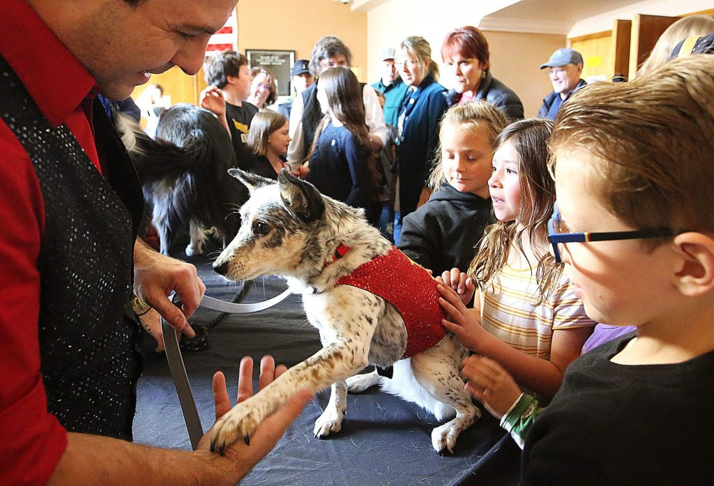 Attendees of the show are able to get close with the stars of the Stunt Dog Experience.
