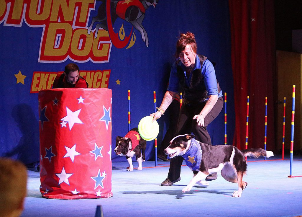 Abby Cline and Chris Perondi have one of their dogs race each other through an obstacle course.