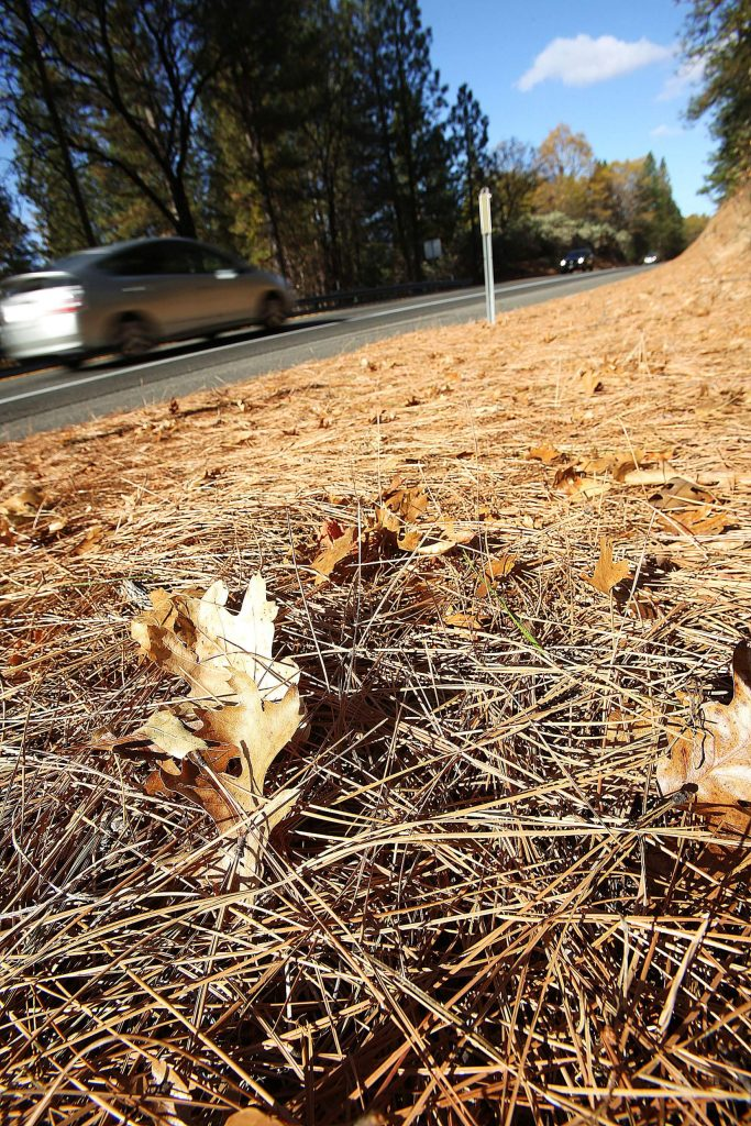 Layers of dry and flammable pine needles line a two-lane portion of Highway 49 between Alta Sierra and Grass Valley Thursday. The potential for another wind event and enhanced risk of wildfire weather is being eyed for Mondayand Tuesday.