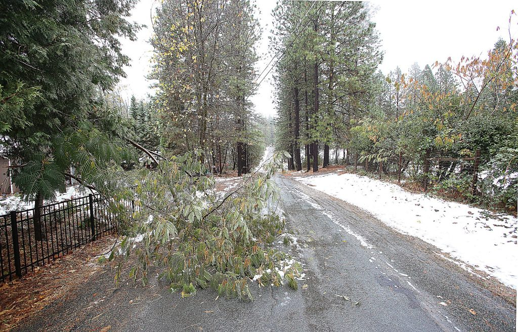 Small limbs block a portion of Sky Pines Road in Alta