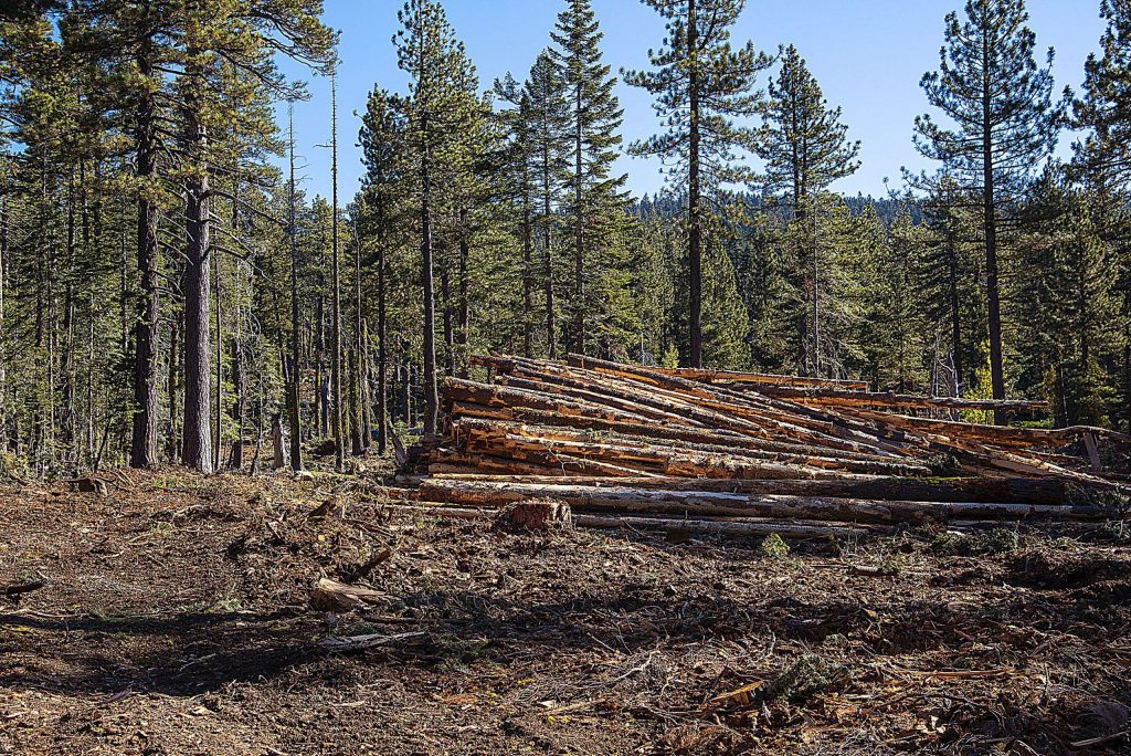 Some of the forest thinning being conducted at the Yuba Project in the Tahoe National Forest.
