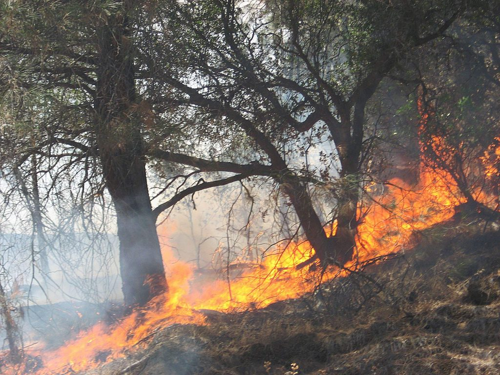 Prescriptive burning of the understory at the Yuba Project helps promote forest resiliency.