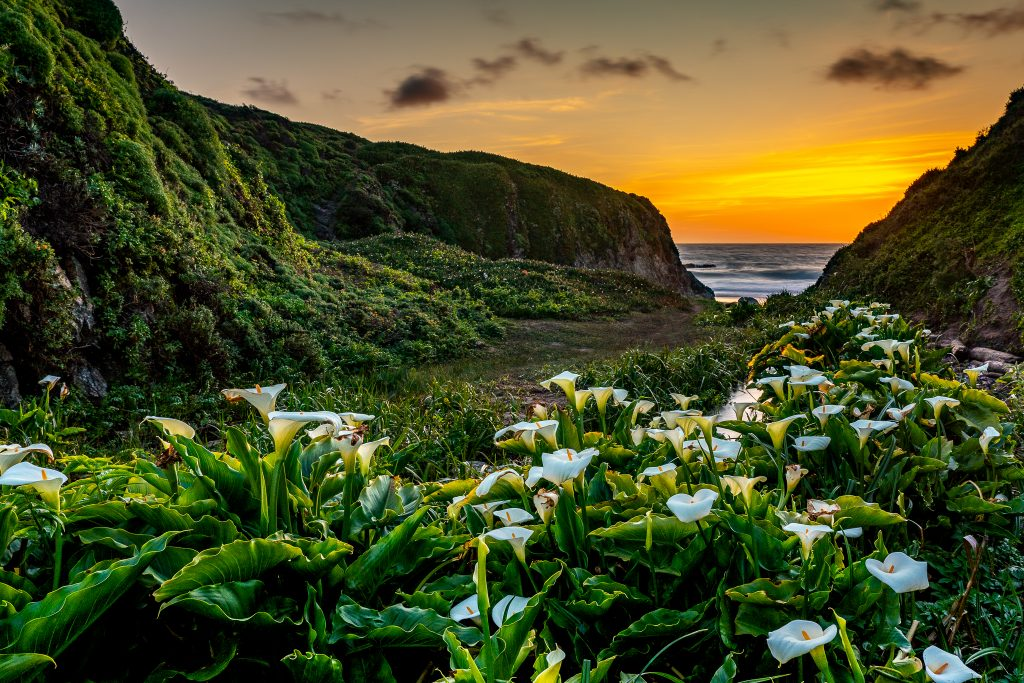 Lilies on the Beach is composed of scene elements in dynamic tension between the close-up lilies and the ocean sunset.