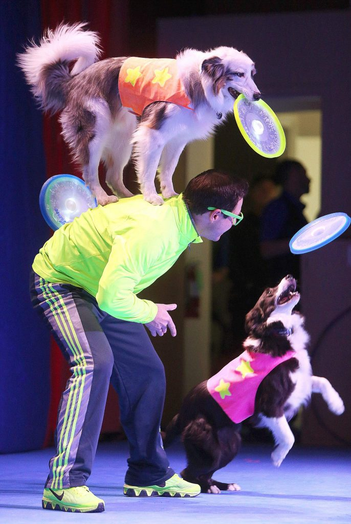 """47) Chris Perondi """"The Stunt Dog Guy"""" wowed crowds young and old at the Veterans Memorial Building in November with his high flying canines."""