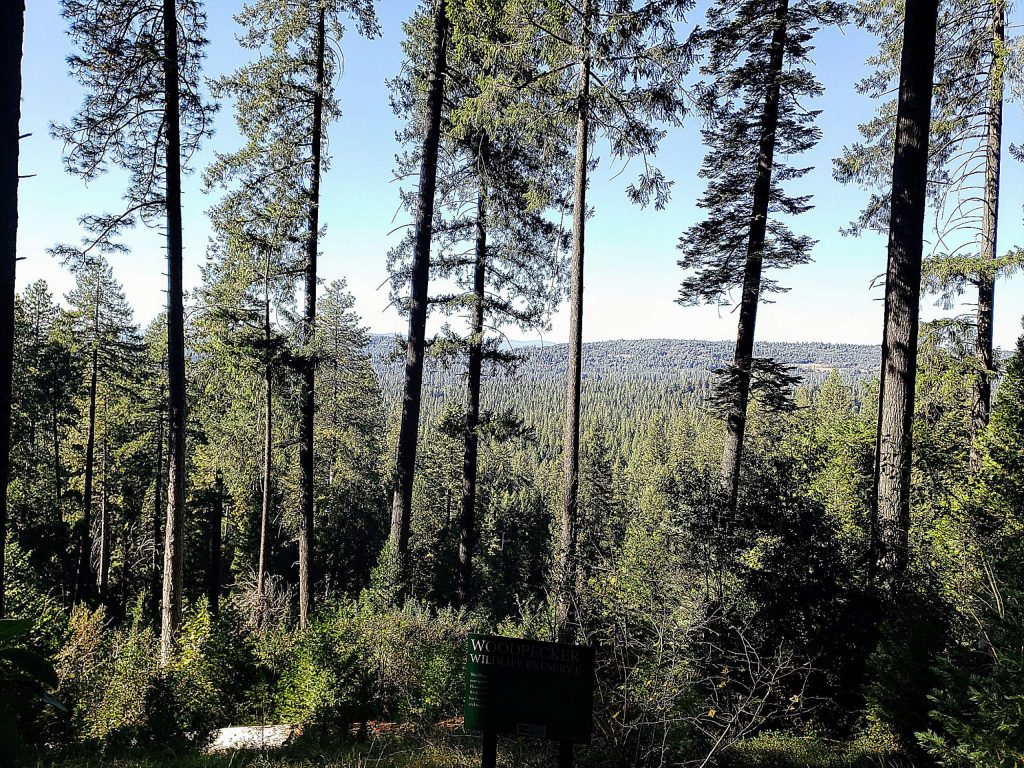 The Cascade Canal Trail offers outstanding views of Nevada City.