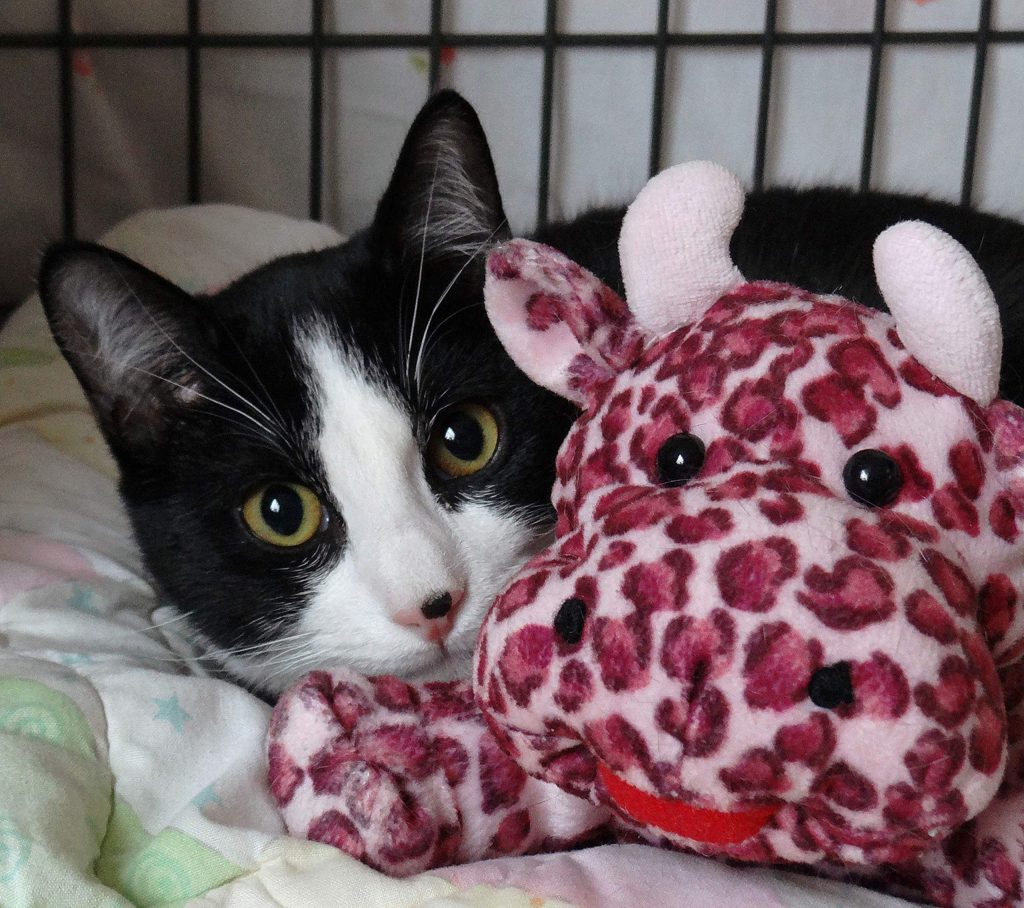 Micky at AnimalSave is hoping for a fur-ever home this Christmas.