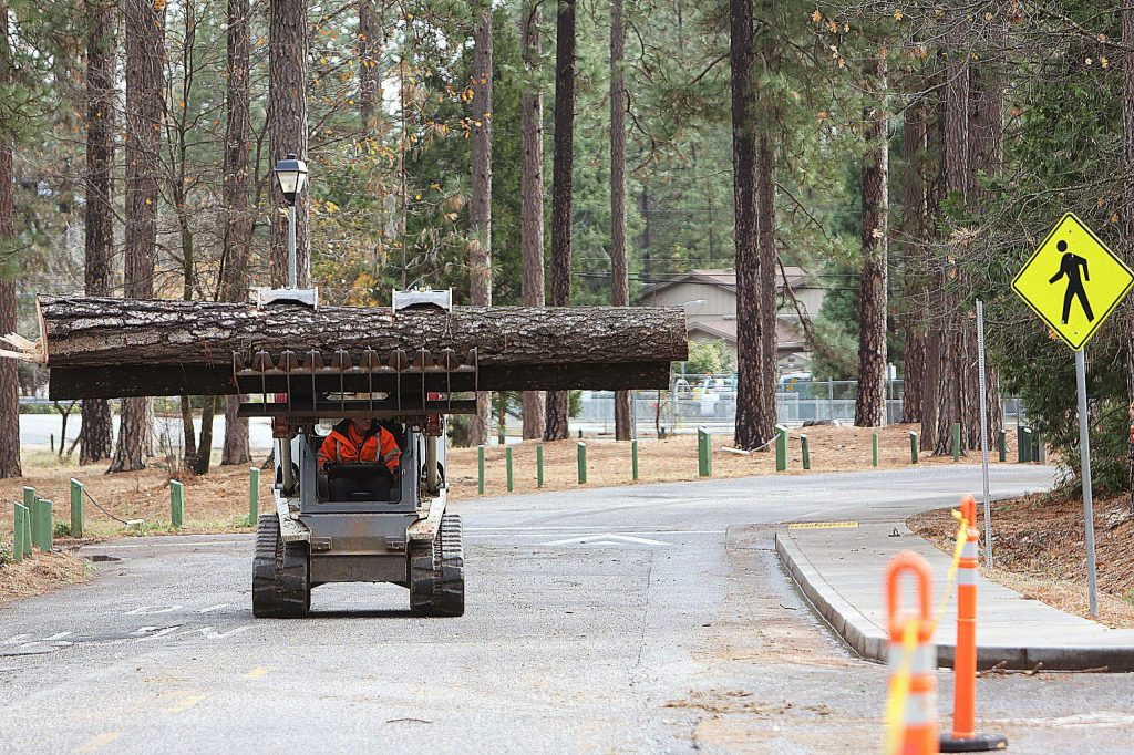 The trees killed by beetles at Condon Park were identified for removal earlier in the year.