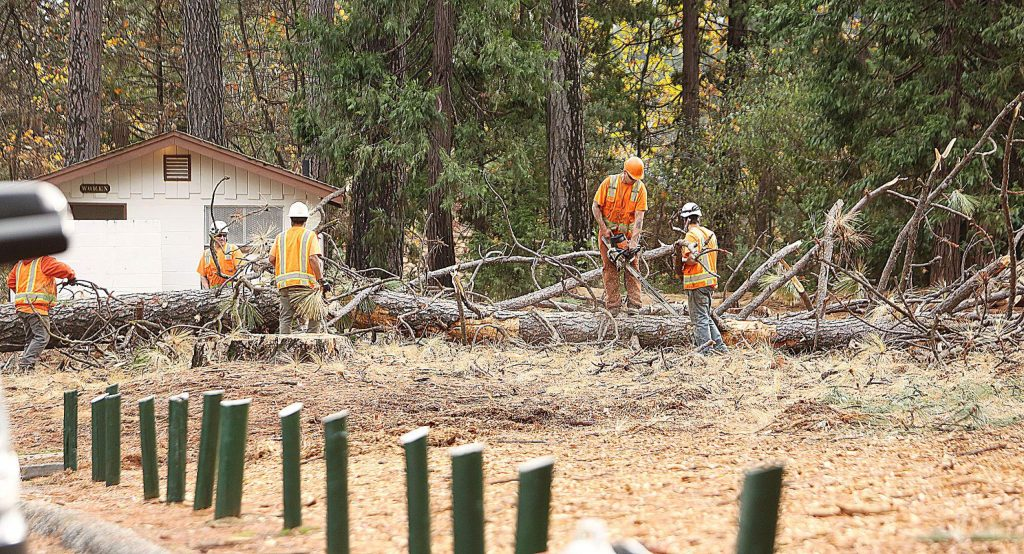 Workers begin to trim limbs from one of the trees killed by beetles before putting them through a chipper.