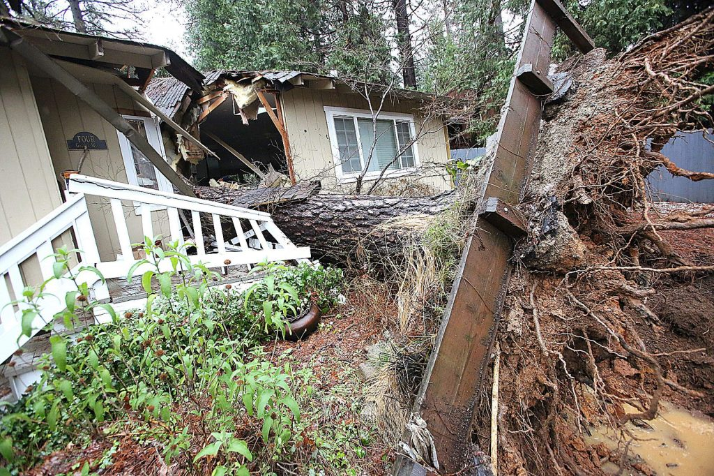 A tall pine tree crashed through this Nevada City home during Thursday morning's torrential wind and downpour. The tree sliced this home in half and damaged another home behind it.