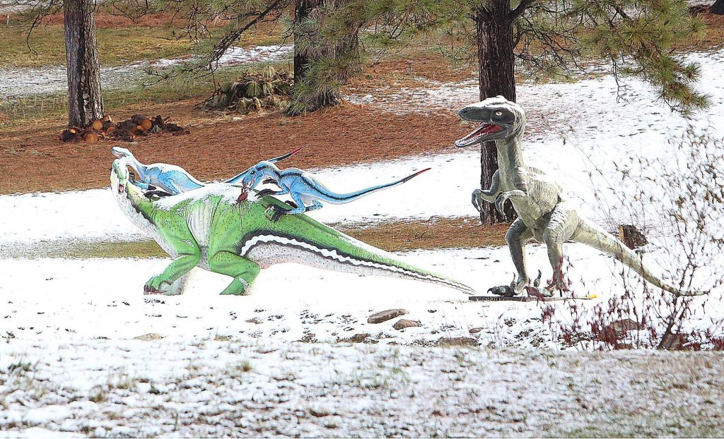 Predator and prey continue their unending chase for survival despite a dusting of low snow.