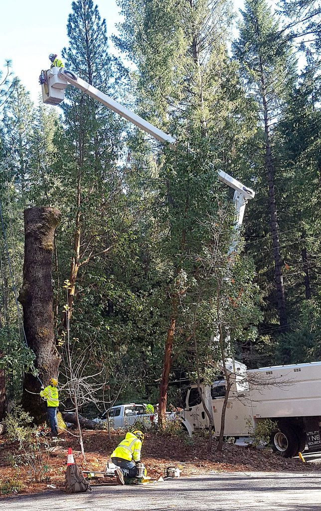 Tree crews from Mountain Enterprises scrambled Monday to take advantage of the break in the rain, taking down trees in Cascade Shores that had been marked by PG&E as dangerous to power line safety. Rain is expected to return on Wednesday.