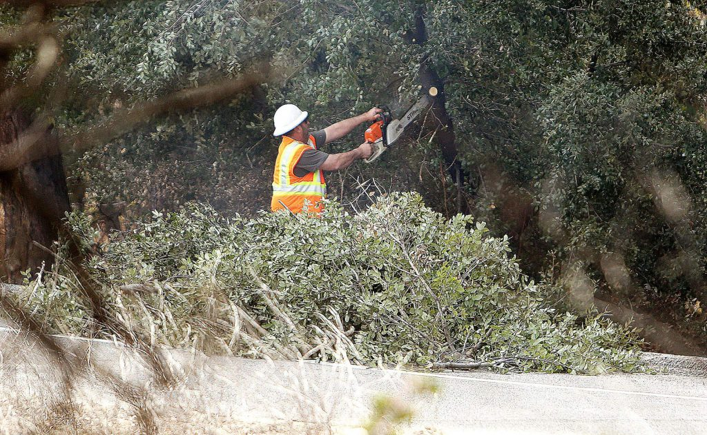 A Caltrans worker uses a chainsaw to trim some low hanging branches during Wednesday's tree clearing work.