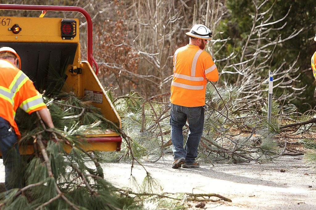 A worker hauls some trimmed tree branches to the tree trimmer.