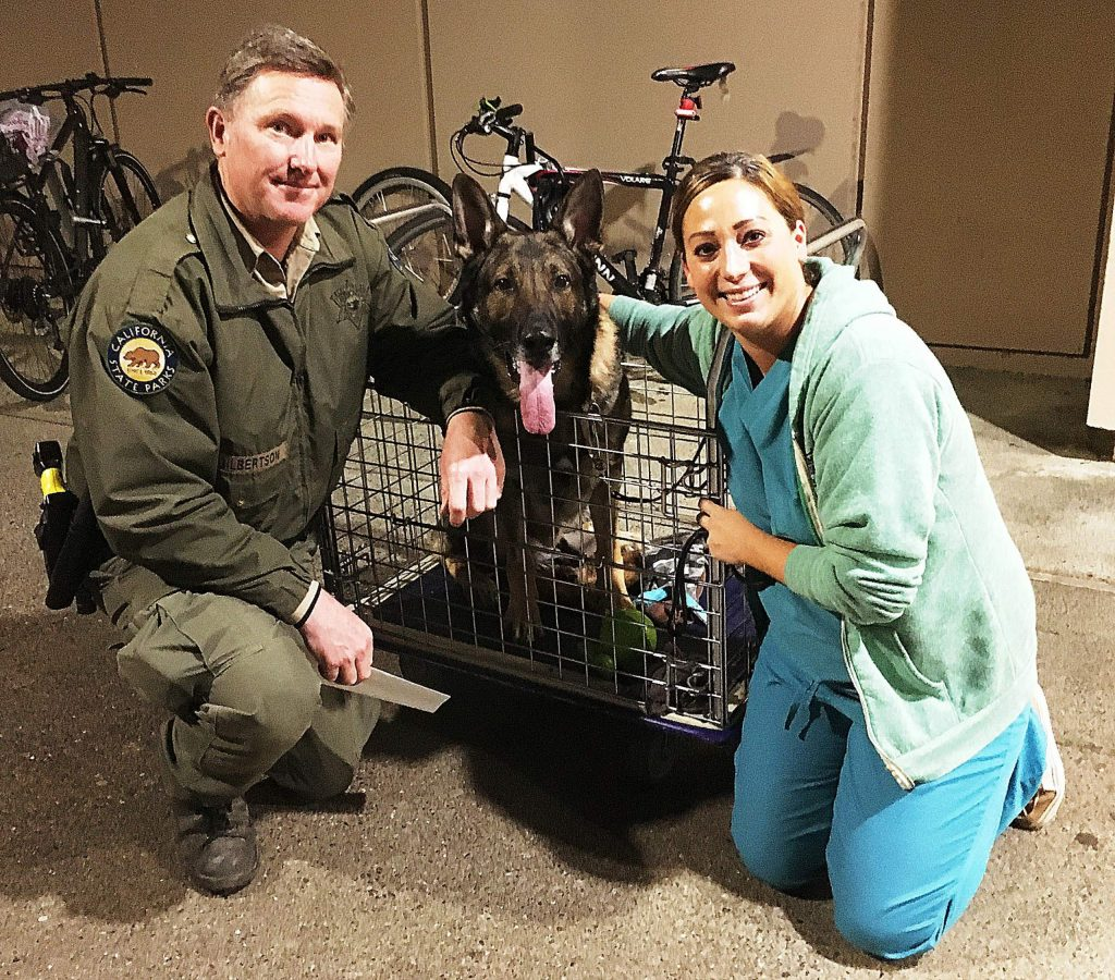 From left, California State Parks Ranger Martin Gilbertson, Miro and UC Davis Veterinarian Teaching Hospital surgeon Dr. Kelly O'Connell.