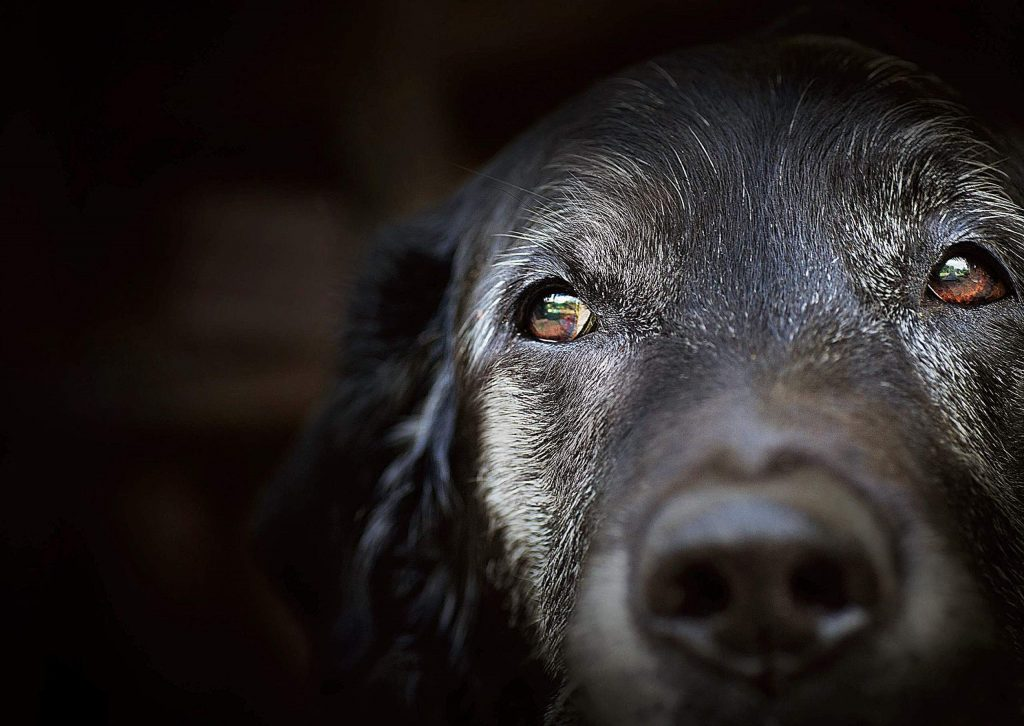 If you're living with a senior pup, you need to be aware of and watch for senior dog health conditions so that you can help improve their quality of life.