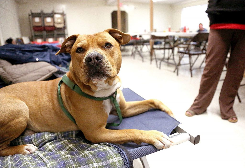 Jack the dog helps keep his owner's cot warm Wednesday at the Nevada City warming shelter set up inside of the Nevada City Veterans Hall. The warming shelter was set up in part to help tally area homeless during the annual point-in-time count.