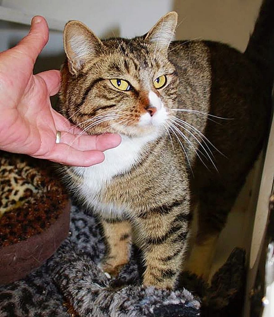 "Sammie's Friends cat, Roxette, a stray, says, ""You had me at Meow!"" Ready for her forever home!"