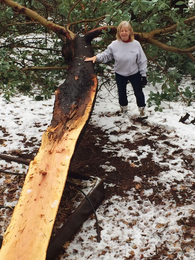 Jan Friend posing with half a 60 ft. Madrone Tree that split vertically right next to our deck on Bubbling Wells Road. Luckily it fell away from our house!