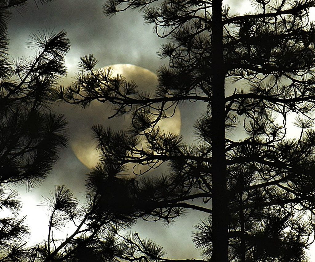Moon peaking through the branches.