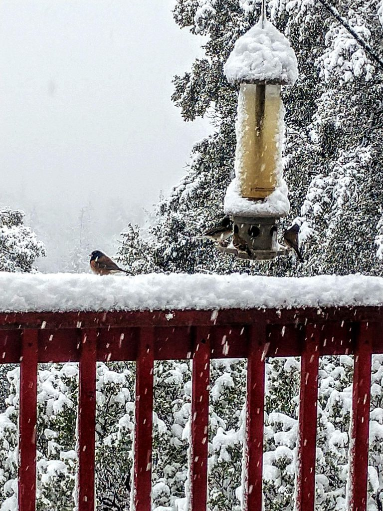 Hungry birds during snowy day Grass Valley.