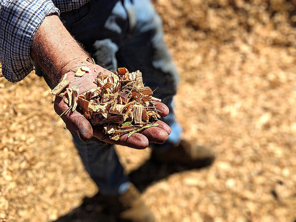 Woodchips are burned at the Loyalton Biomass Facility. The chips are a form of biomass that will be combusted to generate electricity.