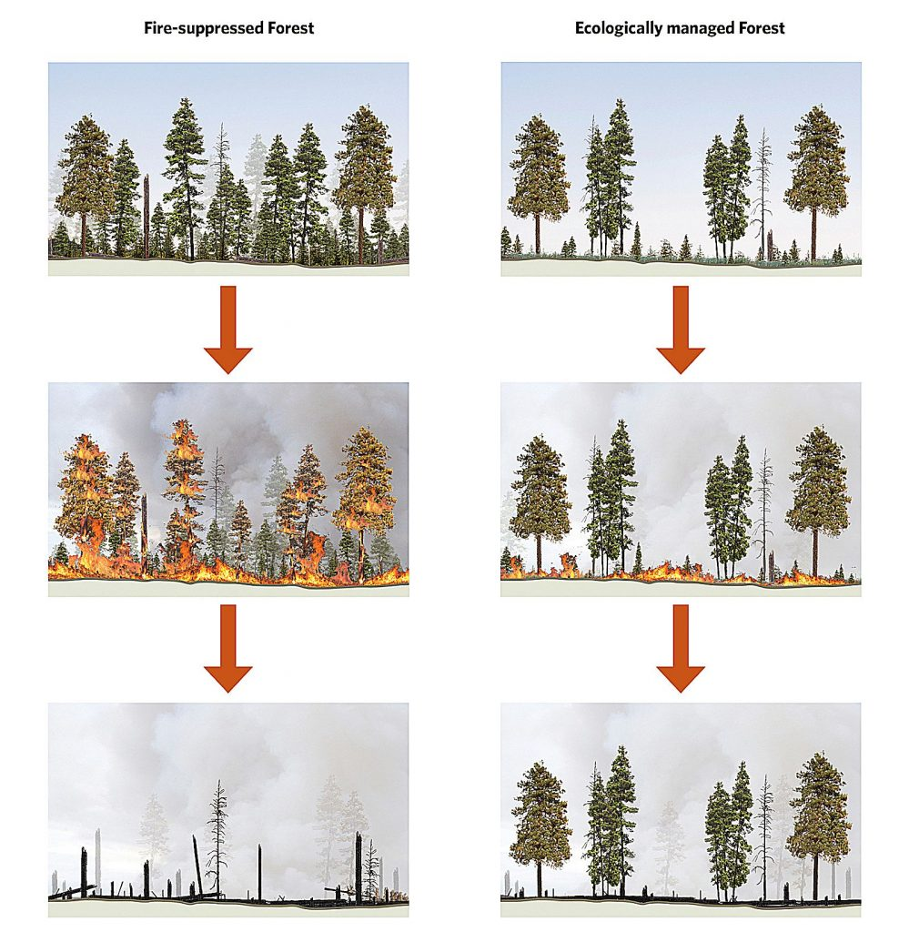 A diagram comparing a better managed forest with one that is less ecologically healthy. The Sierra Business Council argues that biomass energy can be used to create healthier forests.