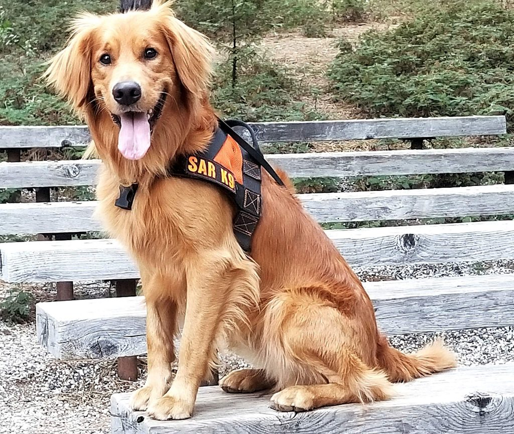 Search and Rescue dog Groot takes a break during training.