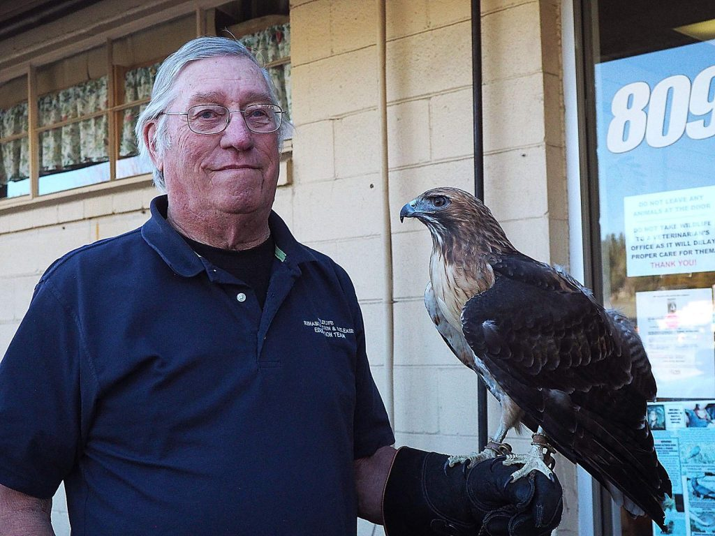 Eric Gunderson holds 8-year-old Skyehawk, a red-tailed hawk that was rescued after being shot in Ojai and losing sight in one eye.