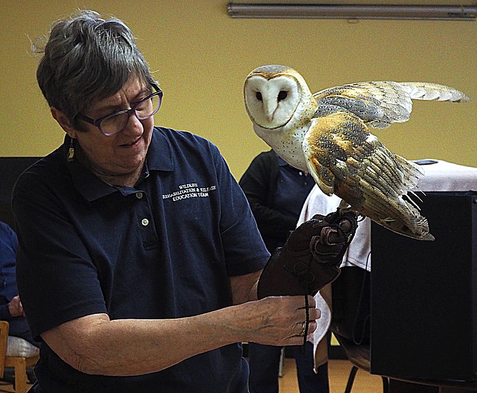 Karen Koskey, of Wildlife Rehabilitation and Release, shows off