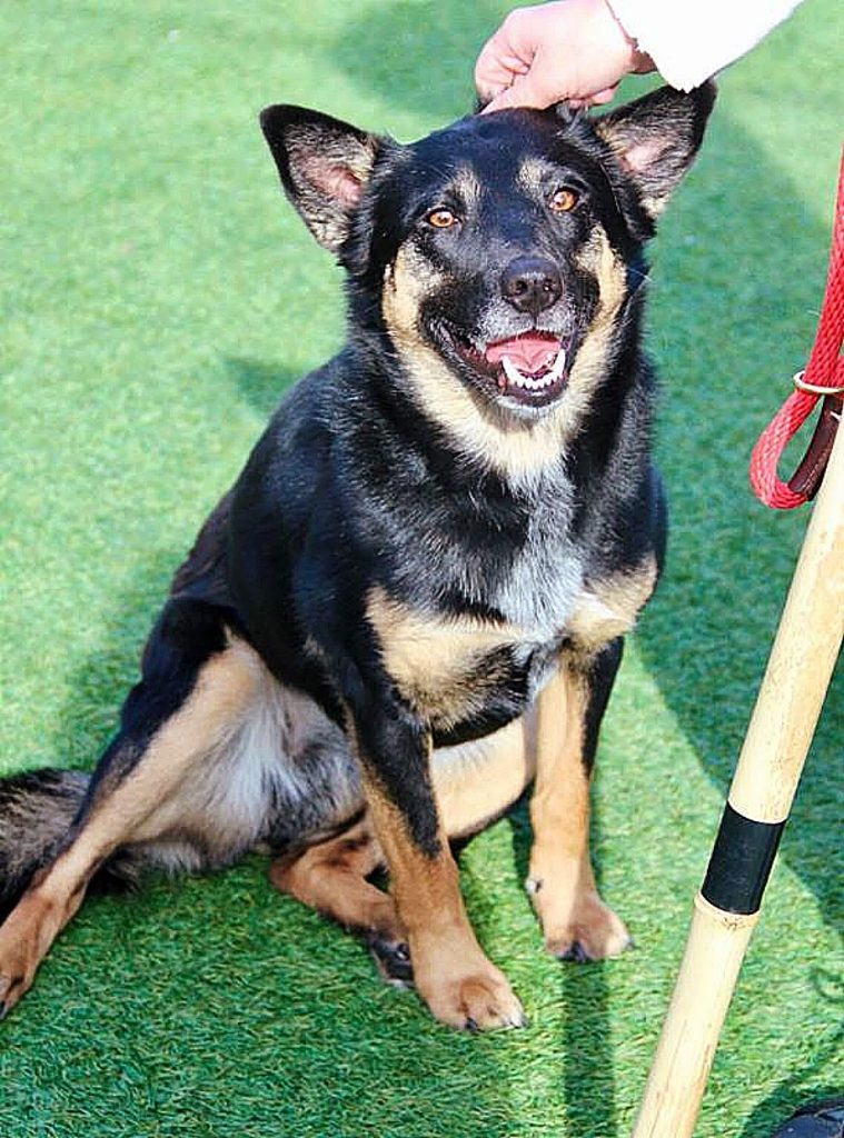 Sammie's Friends pup, Abba, also known as Mama Dog (not Mia), is looking for her new family.