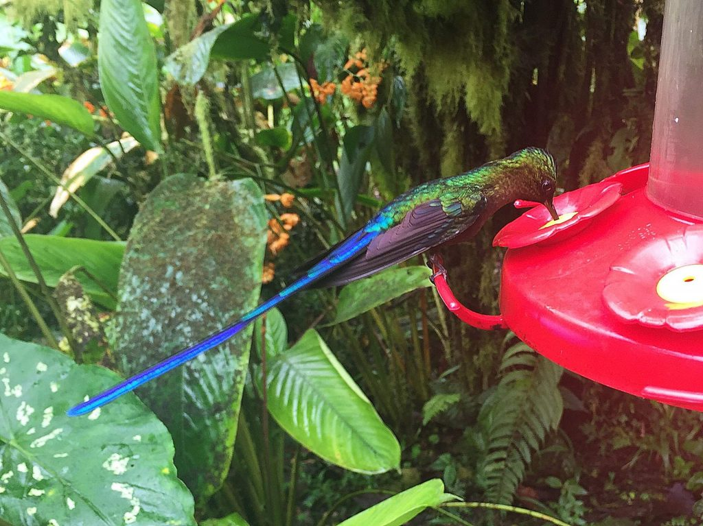New species of Humming Bird discovered in Ecuador.