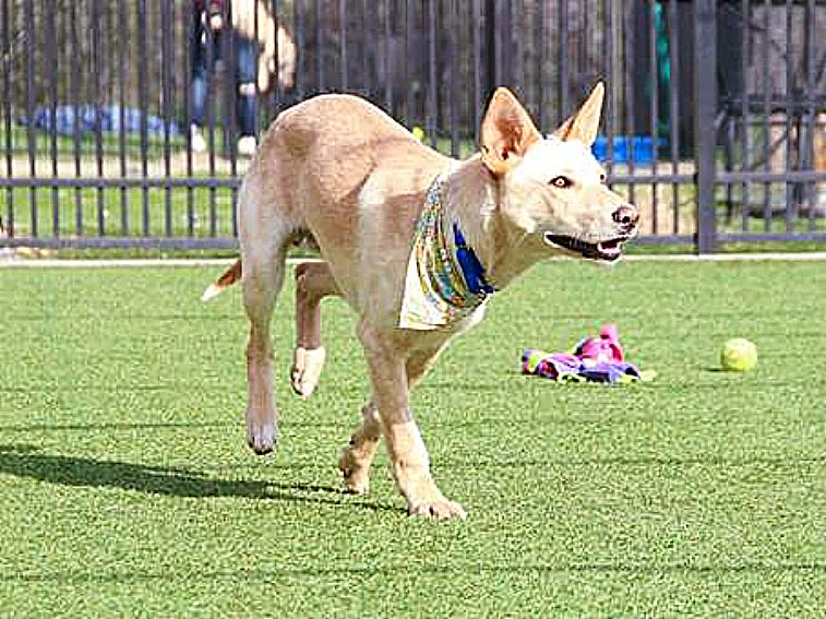 Leo, current resident at the shelter, struts his stuff on the side yard! Come meet me!