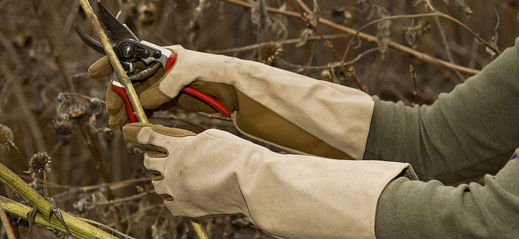 When pruning, start by removing the damaged and diseased stems of shrubs and roses and wear heavy duty gloves to keep yourself free from scratches.