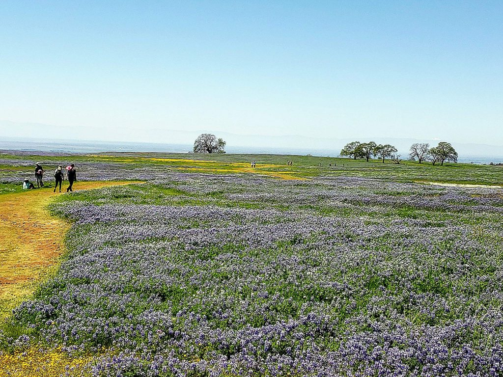 Spring blooms stretch across Table Mountain in Orville. The hike gets crowded with visitors in Spring, especially near Easter.