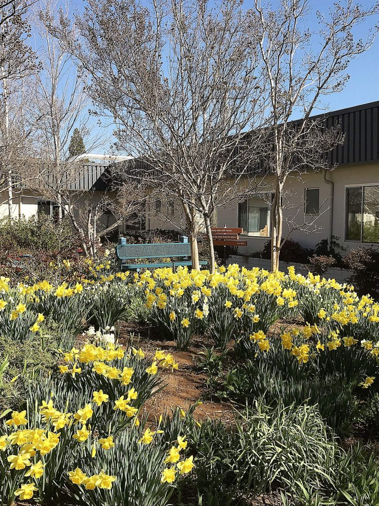 Spring has sprung at Sierra Nevada Memorial Hospital.