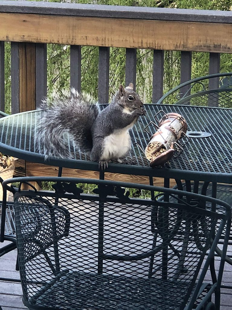 Doing what Mr. Squirrel likes best!