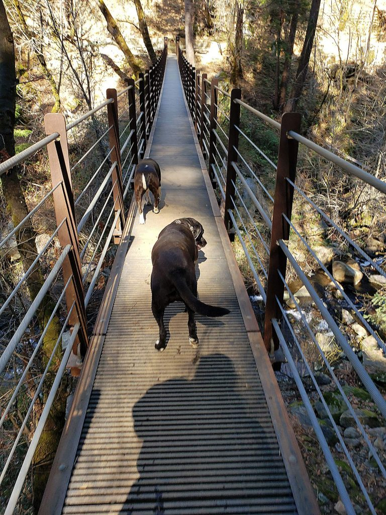 Zeus (in front) & Snot crossed the suspension bridge together during a walk with their moms along Deer Creek Tribute Trails.