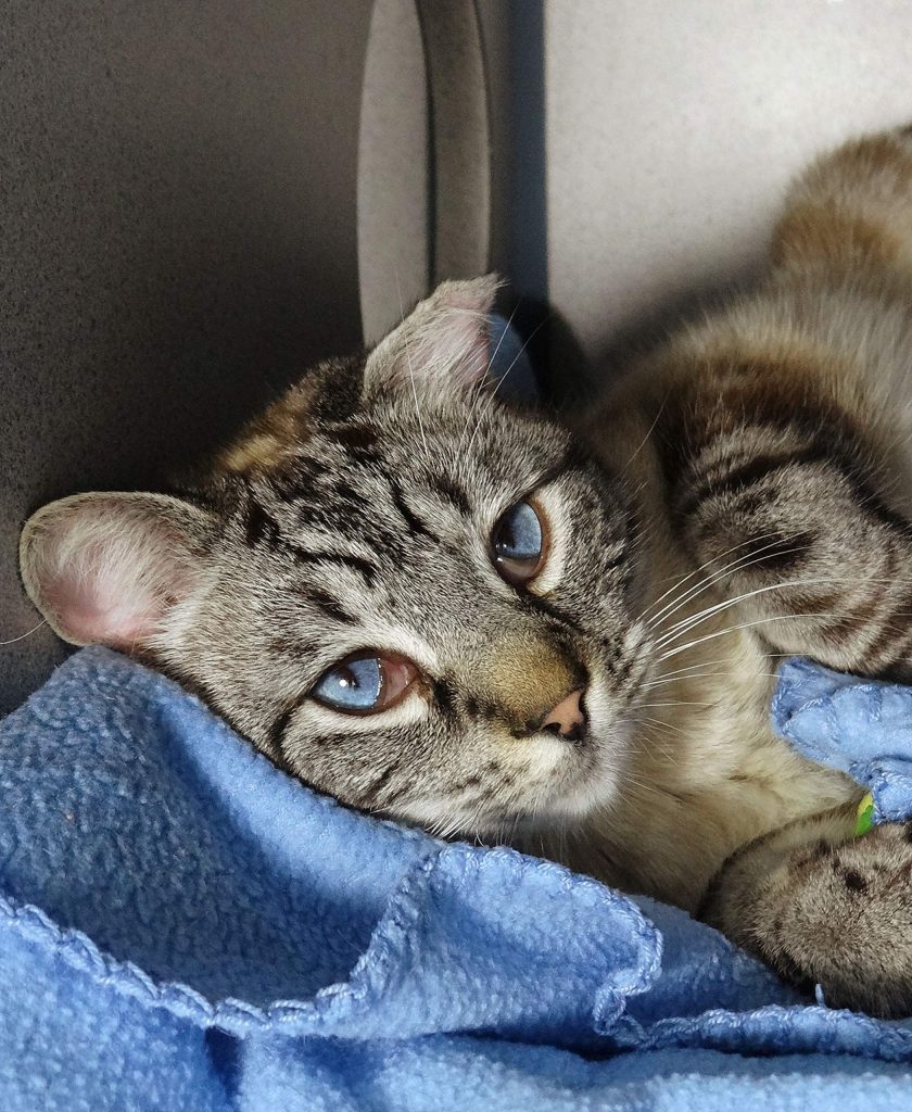 Jester at AnimalSave is a sweet boy who loves snuggling and is hoping for a forever home.