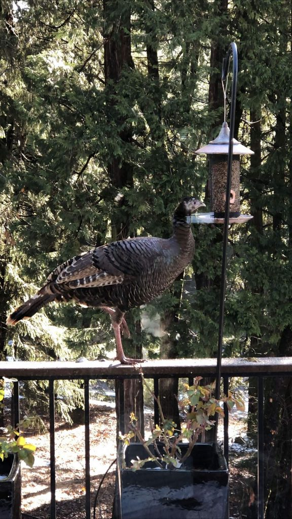 We need a bigger bird feeder!