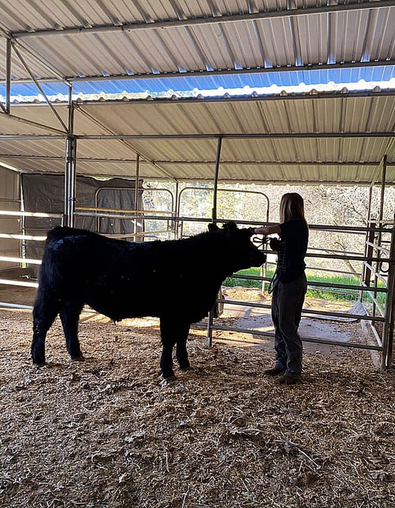 Bear River sophomore Sophia Christen, a standout on the tennis team, said walking her steer around daily has been a good source of exercise while the high school sports are on hold.