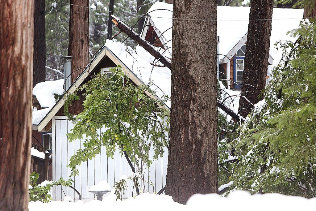 Downed trees and branches can be seen littering the yards of Cascade Shores homes Tuesday after a high impact winter storm dropped a few feet of snow, knocking out power and causing damage to residences.