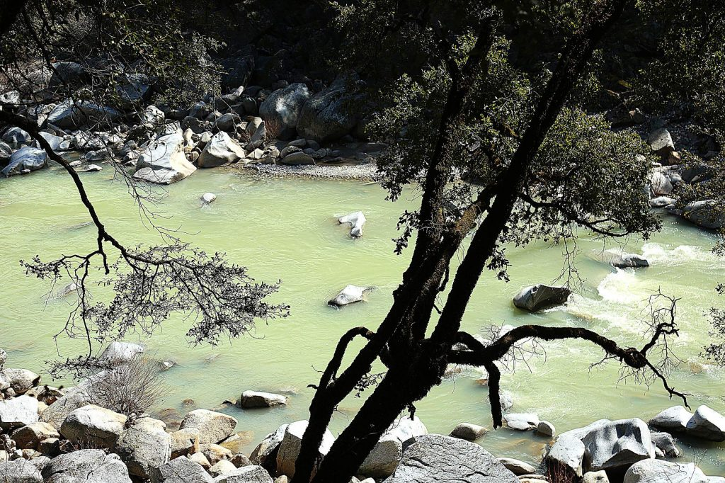 The South Yuba River takes on a color reminiscent of split pea soup as sediments from last week's high impact winter storm slowly settle.