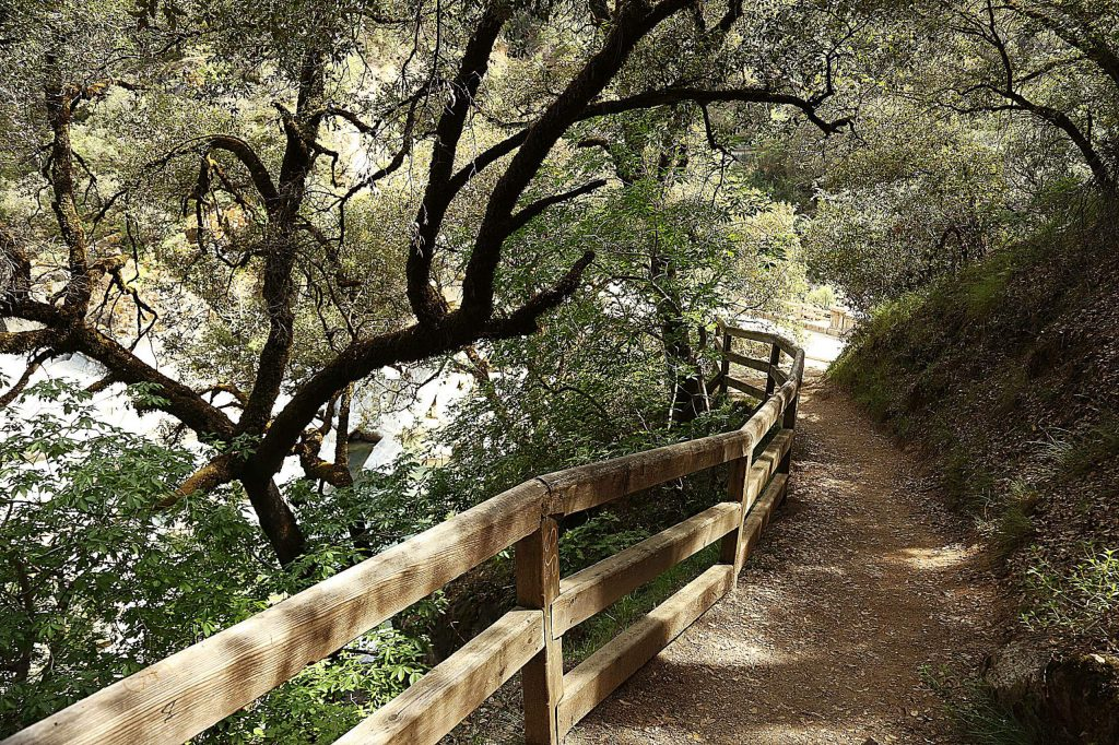 The Hoyt's Crossing Trail twists under an oak tree canopy Wednesday near the Highway 49 bridge in the South Yuba River State Park.