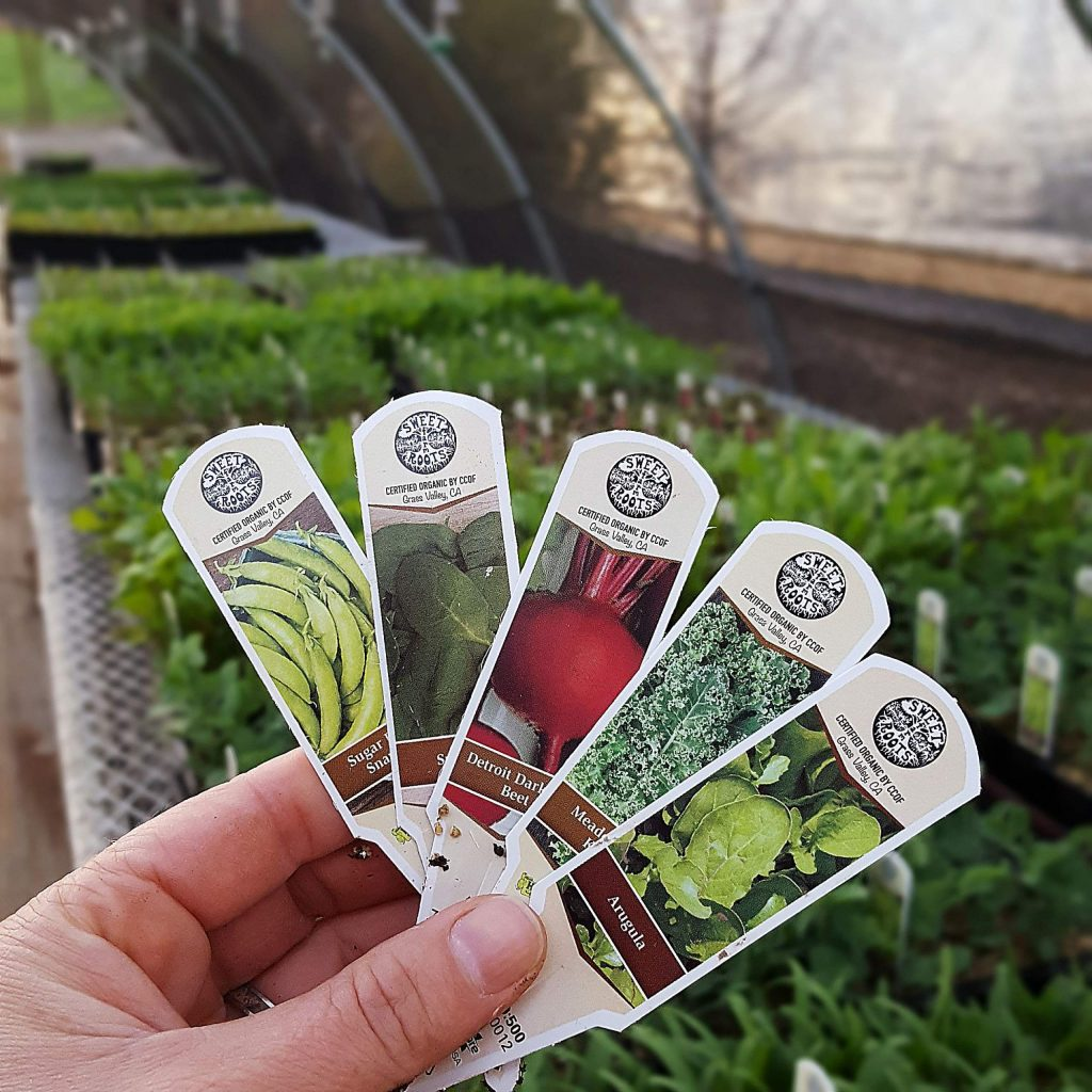 Veggie starts are in high demand from local residents, following a nationwide trend for backyard garden supplies in the wake of COVID-19. Look for plant starts from four different growers at BriarPatch Food Co-op outdoor patio nursery.