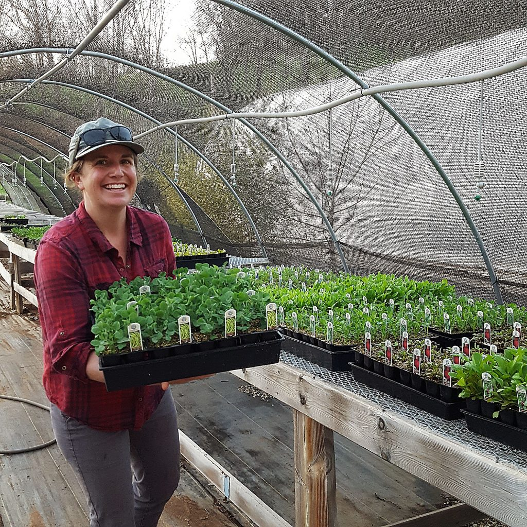 Deena Miller of Sweet Roots Farm is growing more veggie, flower and herb starts than ever to meet a growing demand from locals who want a sense of food security. A full selection of garden starts from four different farms can be found at BriarPatch Food Co-op.