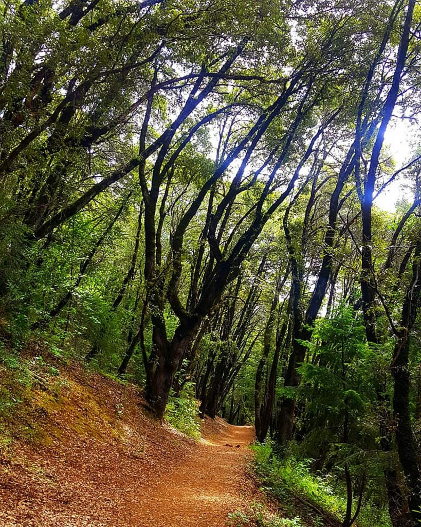 Along the way pine and manzanita line the path with oak and laurel.