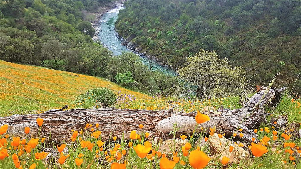 Walking the mountain side trail, take in the amazing view of this deep canyon with the azure blue of the North Fork of the American River far below.
